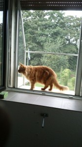 Der Katzenbalkon im Einsatz