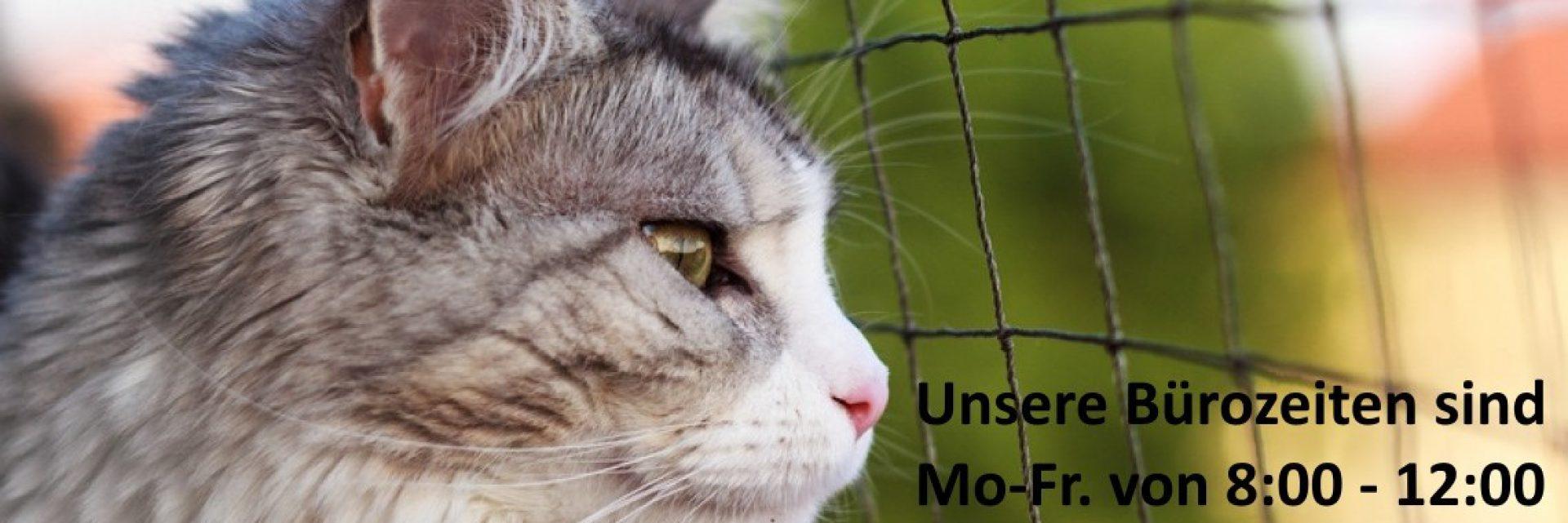 Experte für Katzennetze anbringen